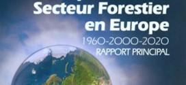 Etude secteur forestier