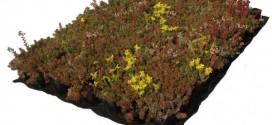 Plaque précultivée toit végétal