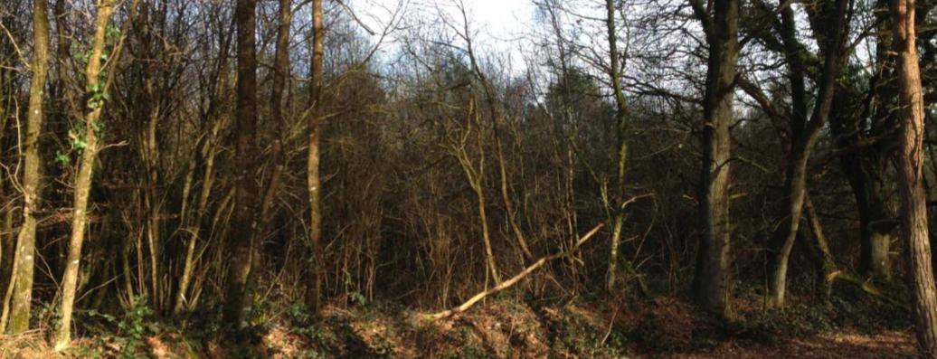 Programme d u2019aidesà la plantation de for u00eats en Bretagne Woodsurfer # Breizh Bois Energie