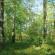Des rendez-vous pour la filière forêt-bois lors de la COP21